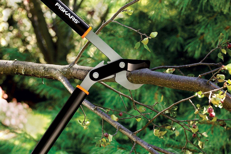 Baumschnitt: Auf die Technik kommt es an