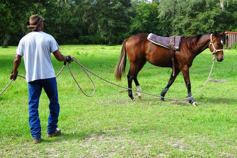 Reitsport: Unfallrisiko Pferdehaltung