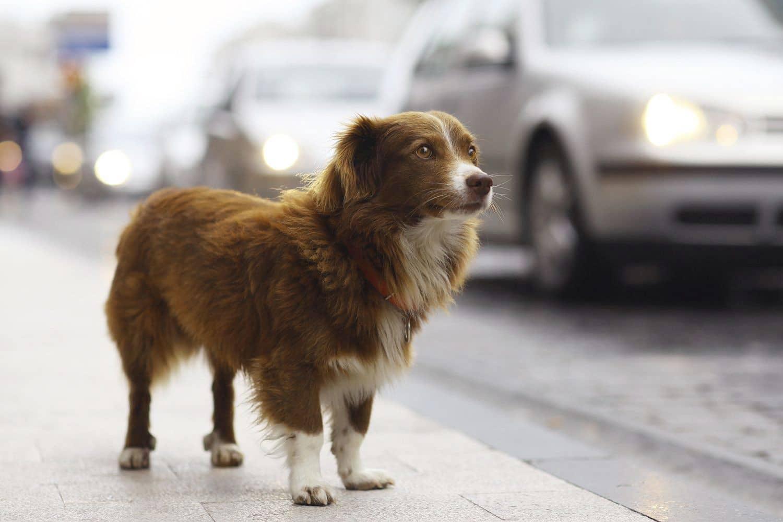 Wachhunde können Außendienstlern gefährlich werden. Foto: fotolia kichigan19